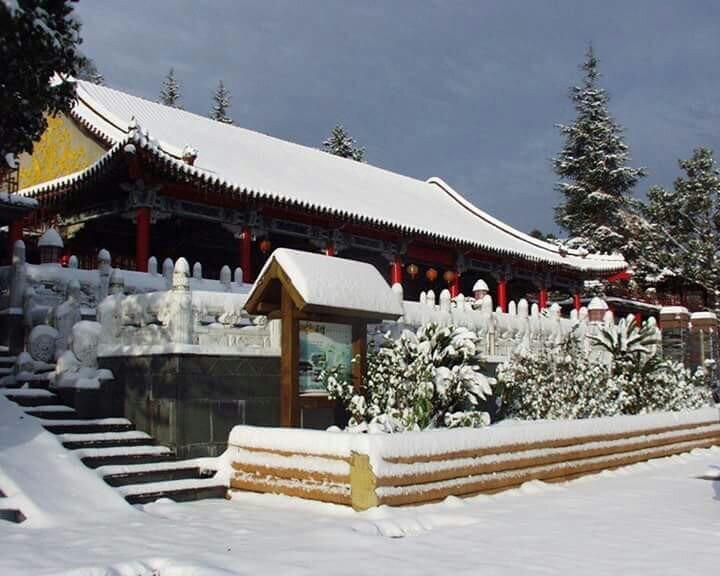 梨山賓館 難得一見之雪景