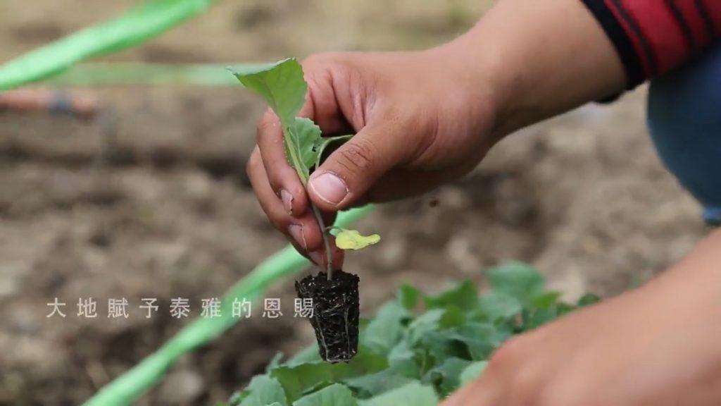 大地賦予泰雅的恩賜 種菜體驗