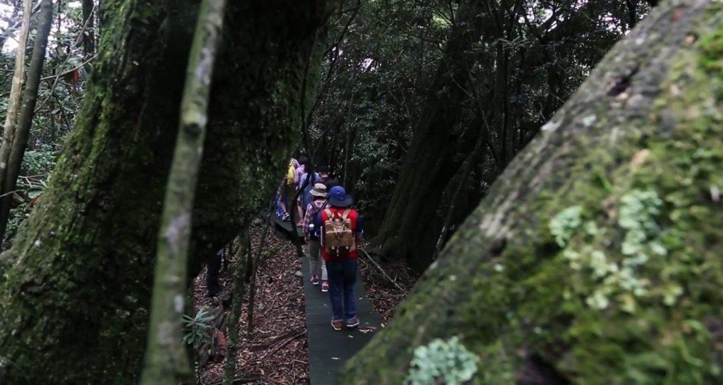 古邁茶園及黑森林導覽