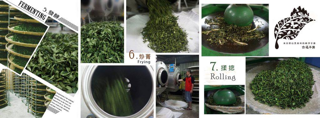 茶葉製作步驟 5-7